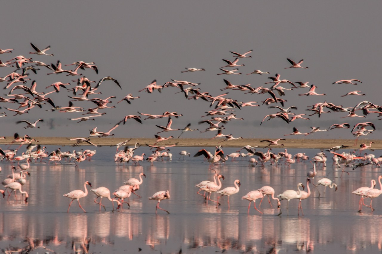 bird watching at rann of kutch